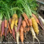 160x160 Growing Carrots