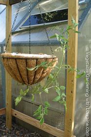 Hanging Basket Upside Down Tomato Planter