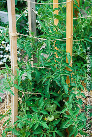 Garden Trellis: 2x2s and String