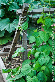 Garden Trellis: 2x2 and Wire A-Frame