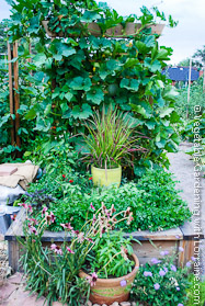 Japanese-style Garden Trellis Loaded with Beans and Winter Squash