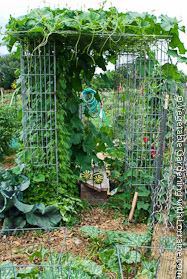Shade House of Wire Mesh Columns, Growing Long Melons