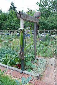 Cedar and wire vegetable trellis doubles as tool storage.