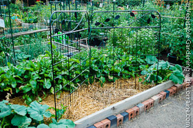 Decorative Steel Garden Trellis