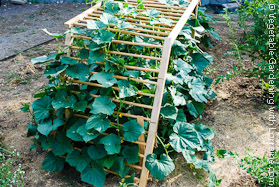 Wooden Arch Ladder Cucumber Trellis