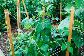 Bean Trellis of 1x2s and String
