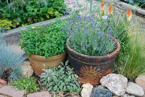 Garden Design with Growing Herbs with Perennial Garden from ve ablegardeningwithlorraine
