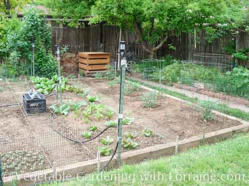 A wide-bed vegetable garden layout wastes less space in paths than a row garden does