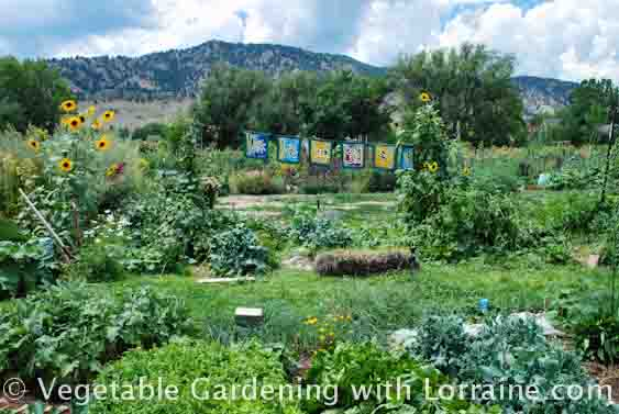 Growing all your own food requires planning and a lot of land.