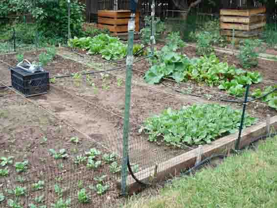 French intensive raised bed