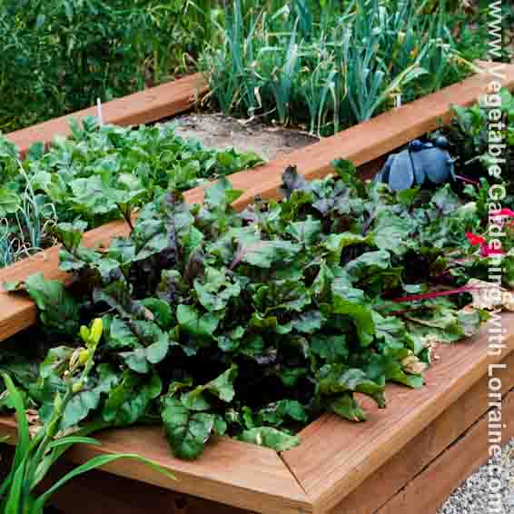 garden design with vegetable gardening tips with lawn landscaping from vegetablegardeningwithlorrainecom