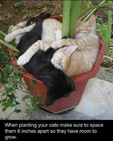 Advice when planting cats