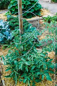 Garden Trellis: 2x2 and Spiral Wire