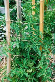 Garden Trellis: 2x2s and String