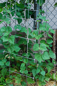 Square wire commercial bean trellis