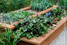 Go to Raised Bed Vegetable Garden