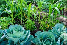 Go to Vegetable Gardening Tips