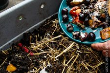 Go to Vermicomposting in a Worm Bin