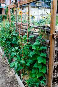 Vertical Vegetable Gardening: Trellis 1