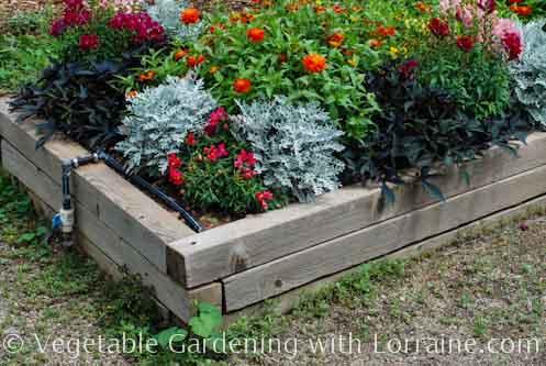 Merveilleux Vegetable Gardening With Lorraine.com